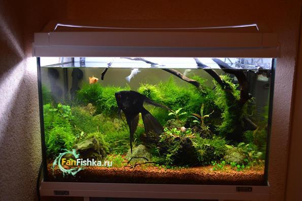 аквариумные мхи