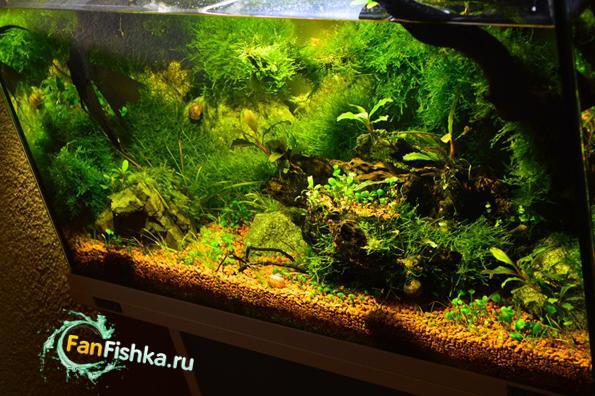 аквариум мшарник