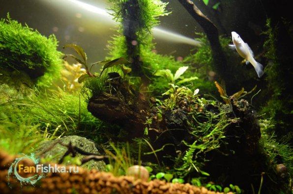 Макро в аквариум своими руками