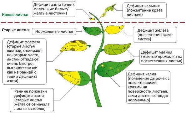 Фото признаки и симтомы заболевания аквариумных растений