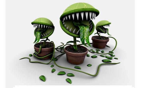 Болезни аквариумных растений и их лечение