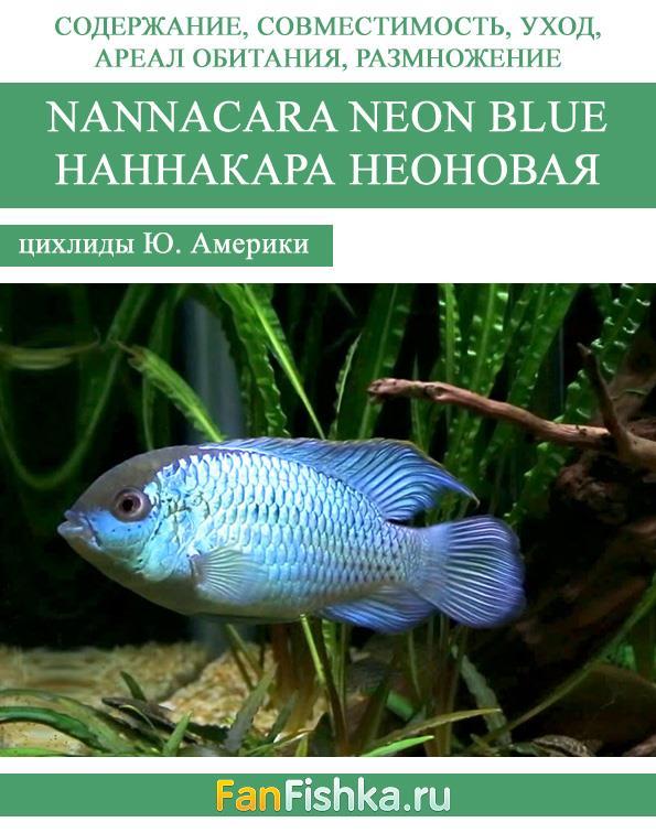 Наннакара неоновая