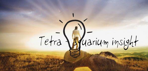 Московский семинар Tetra: весеннее настроение!