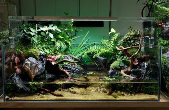Палюдариумы – водные сады в домашнем интерьере.