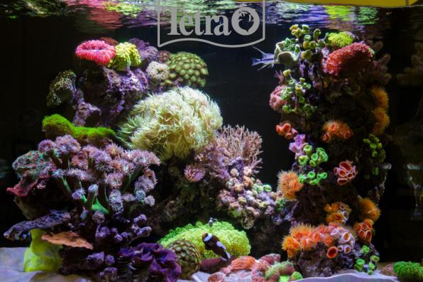 Удивительные краски морского рифа!