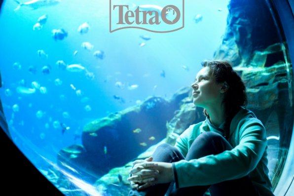 Твои выходные проходят у аквариума?