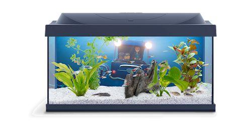 Как выбрать рыбок для аквариума