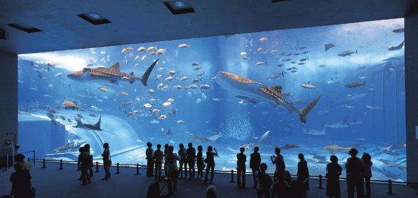 Гигантский аквариум в Японии Okinawa Churaumi Aquarium видео
