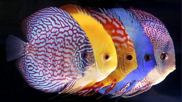 Аквариумные рыбки: виды, названия, список, фото-видео обзор