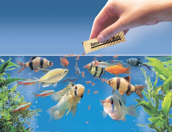 Как и сколько кормить рыбок