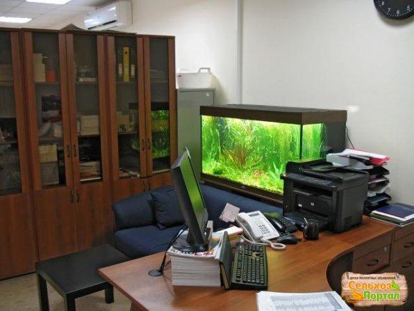 Аквариум на работе и в офисе