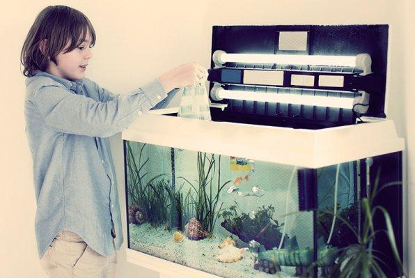 Как обустроить первый аквариум?