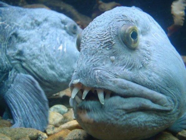 Стоит ли заводить аквариум и рыбок, какие недостатки стоит учесть?