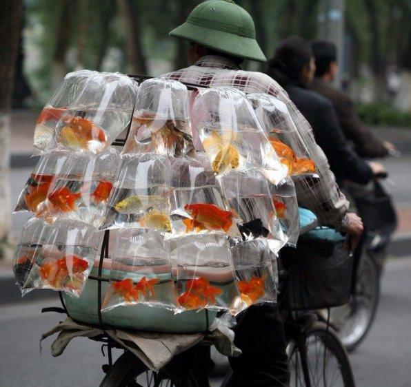 Сколько стоят рыбки?