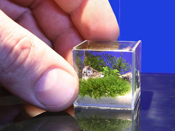 Маленький аквариум: достоинства и недостатки!