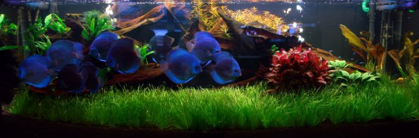 Какой аквариум лучше выбрать?