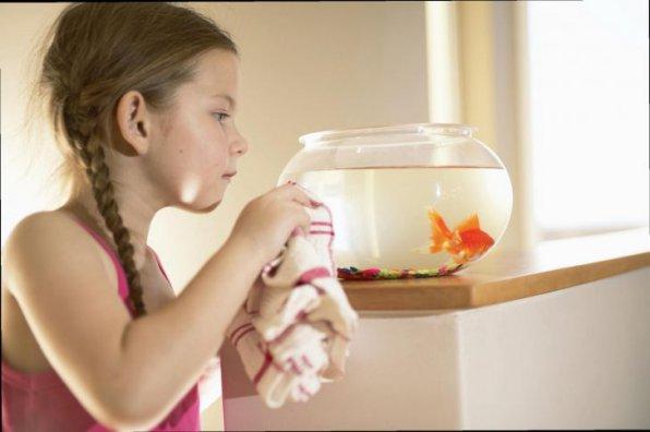 Как чистить и мыть аквариум?