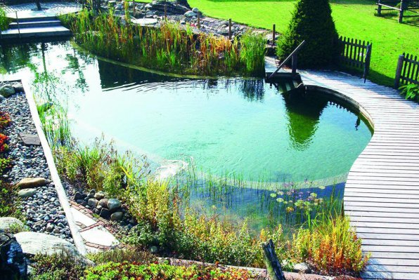 Озерцо пруд в приусадебном саду