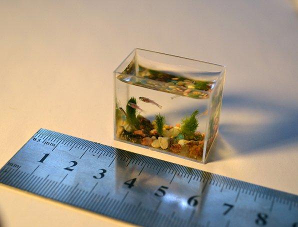 Cамый маленький аквариум
