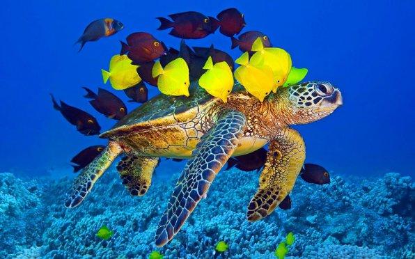 Аквариумные черепахи: популярные виды и их совместимость с рыбками