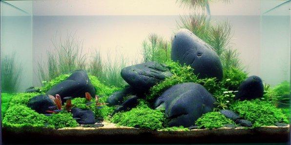 Аквариумные растения для начинающих