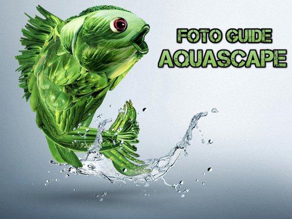 Оформление аквариума, примеры акваскейпинга