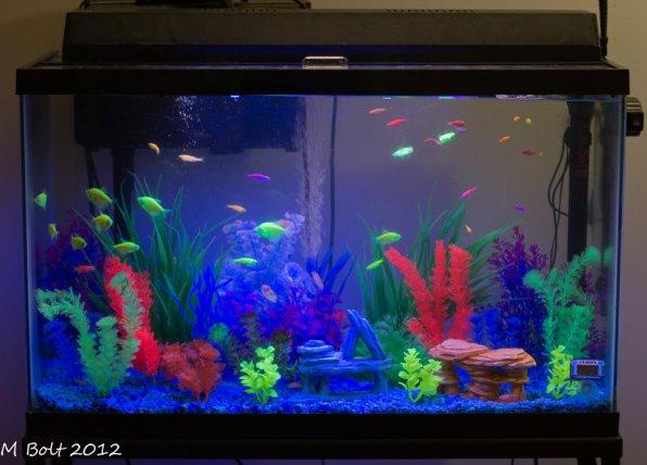 Оформление аквариума: фото, видео примеры, стили и варианты