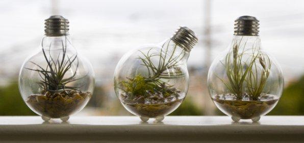 Освещение аквариума и выбор ламп