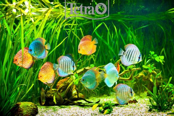 Короли аквариумного мира, вы безупречны!