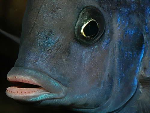 Глаза и губища голубого дельфина