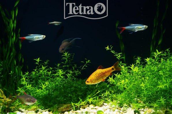 Возвращаясь с работы, я отдыхаю - сижу в кресле и любуюсь своим вечерним аквариумом!