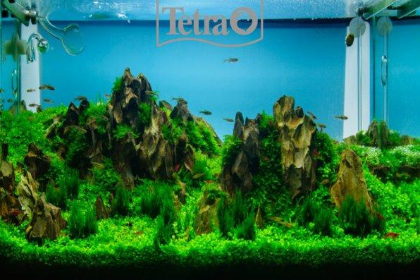 Мы - покорители аквариумных вершин!