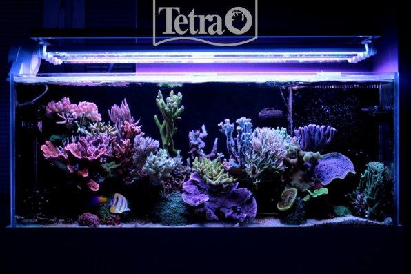Необычайно красивый, завораживающий, морской аквариум!