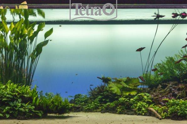 Легкий, воздушный аквариум-травник! Как вам?