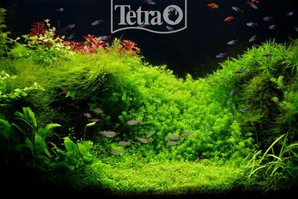 Зеленый, аквариумный коврик всегда радует глаз!