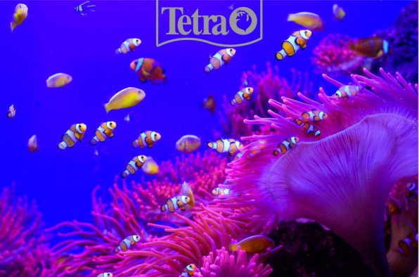 Пурпурный закат морского аквариума!