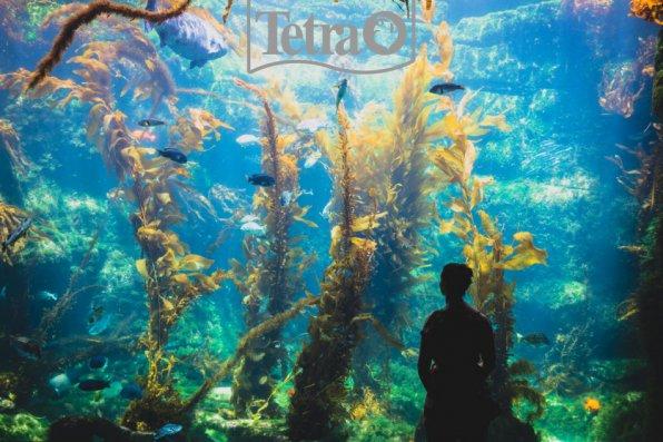 Плох тот аквариумист, кто не мечтает о таком у себя дома!
