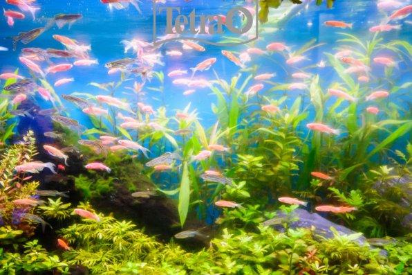 Травка зеленеет, солнышко блестит, аквариум с даньками весело искрит!