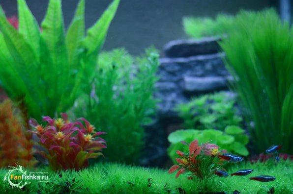Пластиковые водорослидля аквариума