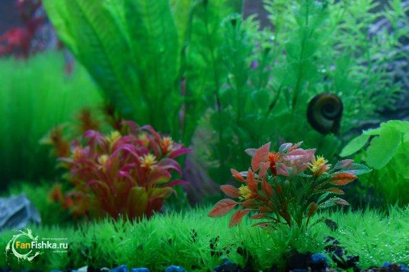 Пластиковые растениядля аквариума