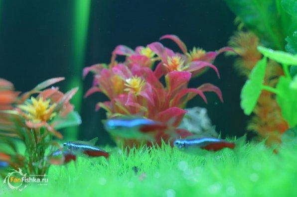 Искусственные камни для аквариума
