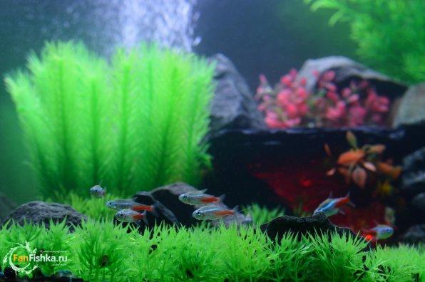 Все об искусственных растениях для аквариума