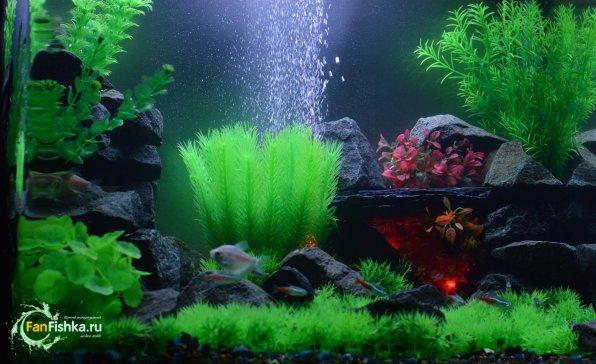 Искусственные аквариумные растенияоформление