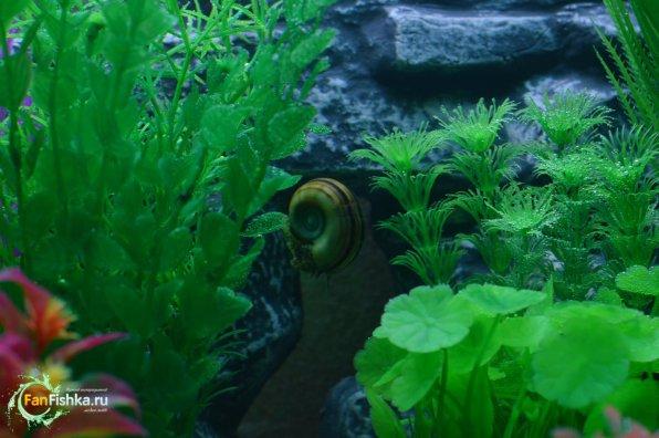 Искусственные растения ваквариуме