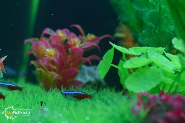 Искусственные водоросли для аквариума