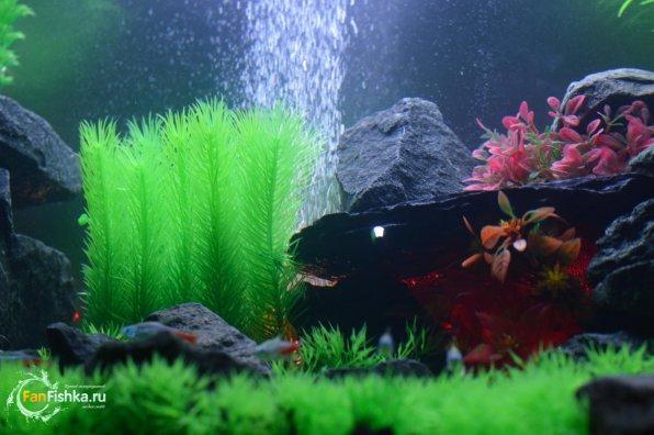 Пластиковые аквариумные растенияоформление