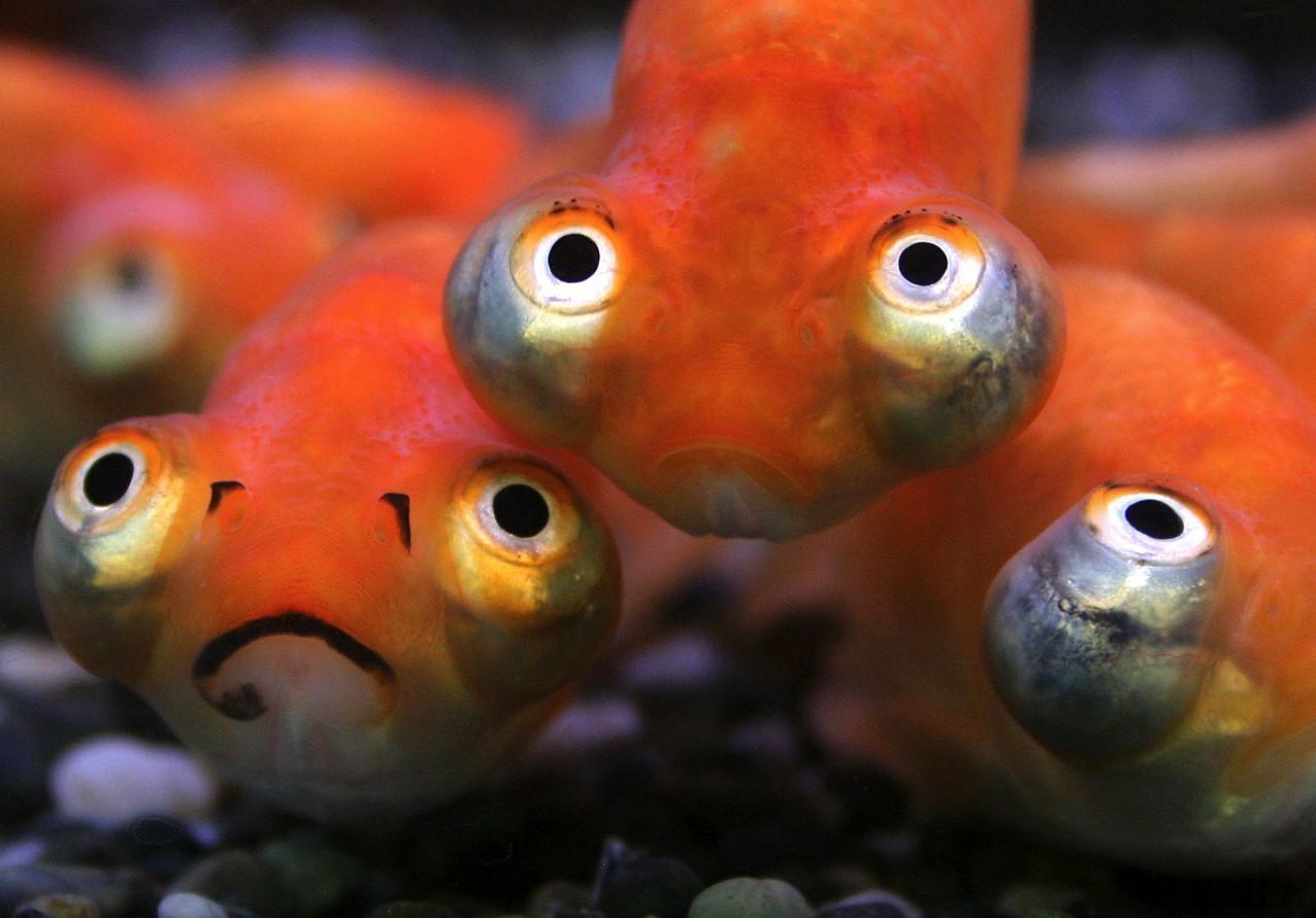 слишком смешная картинка рыба в аквариуме москве