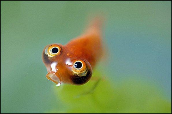 Водяные глазки фото