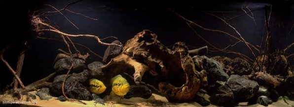 Биотопный аквариум, как вид аквариумного искусства!