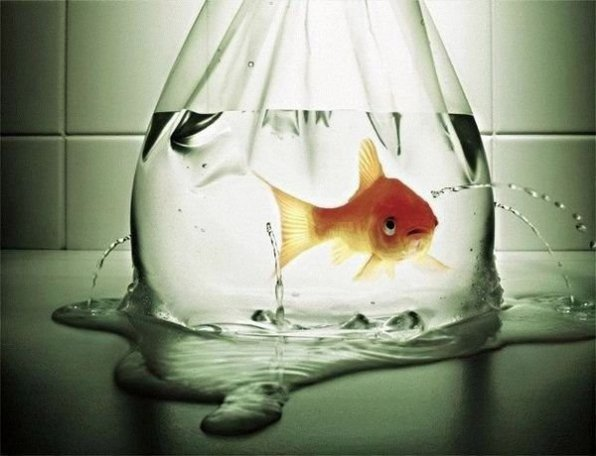 Почему умирают рыбки